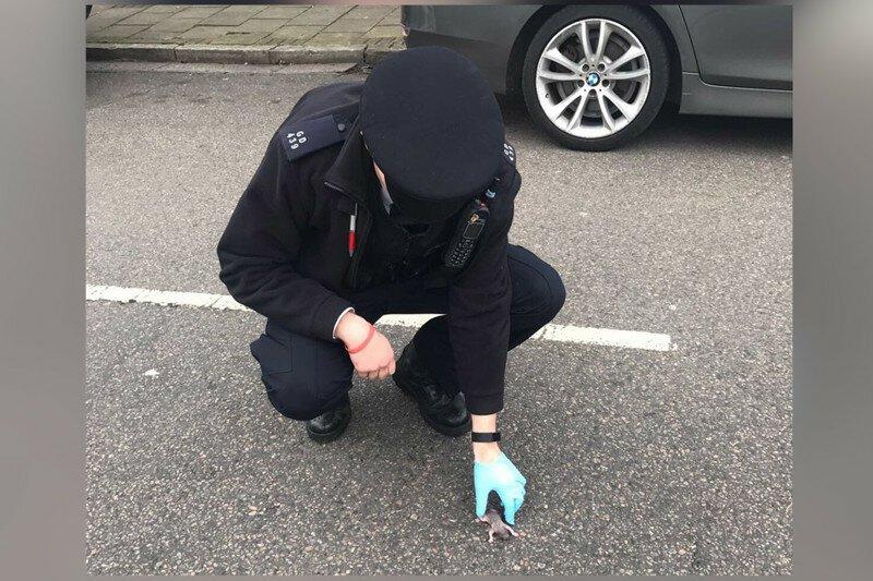 Английские полицейские спасли новорождённого бельчонка