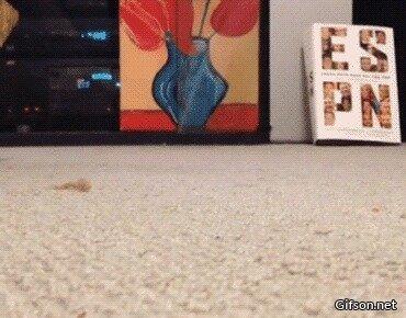 Кошка в тапке