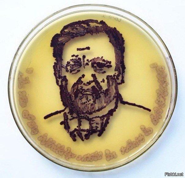 Микробиологи из разных стран представили миниатюрные работы с бактериями, сде...