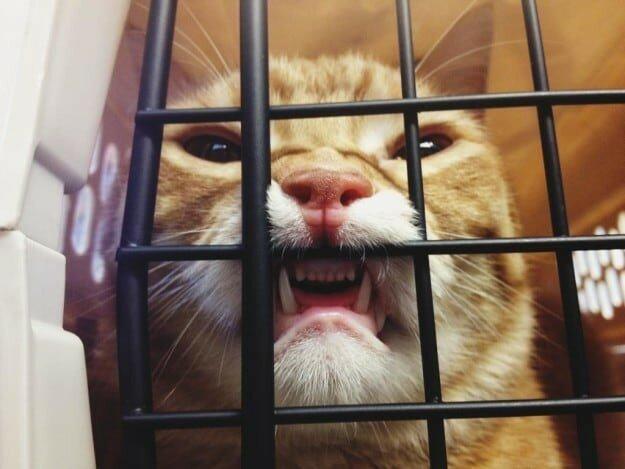 Пачка доказательств: коты точно звери с причудами