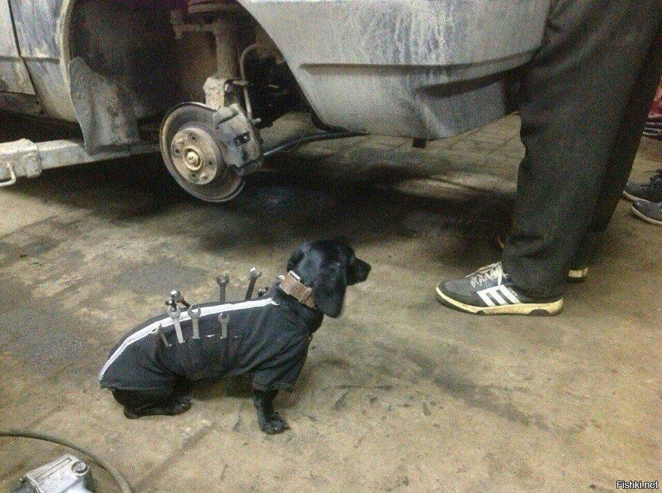 Собака-слесаряка