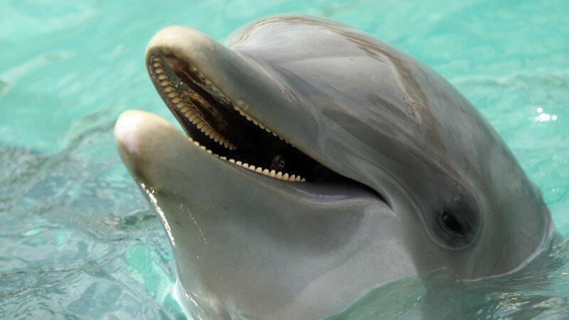 Мы не одиноки: открытие дельфиньего языка