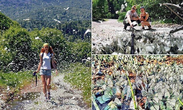 Эффект бабочки по-сибирски: тысячи насекомых заполонили города Сибири