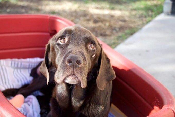 Собака, пропавшая без вести, через месяц нашлась в колодце за полмили от дома