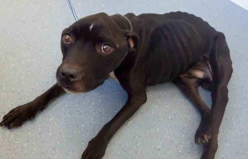 Британский суд запретил мужчине, который морил голодом свою собаку, заводить животных в ближайшие 10 лет