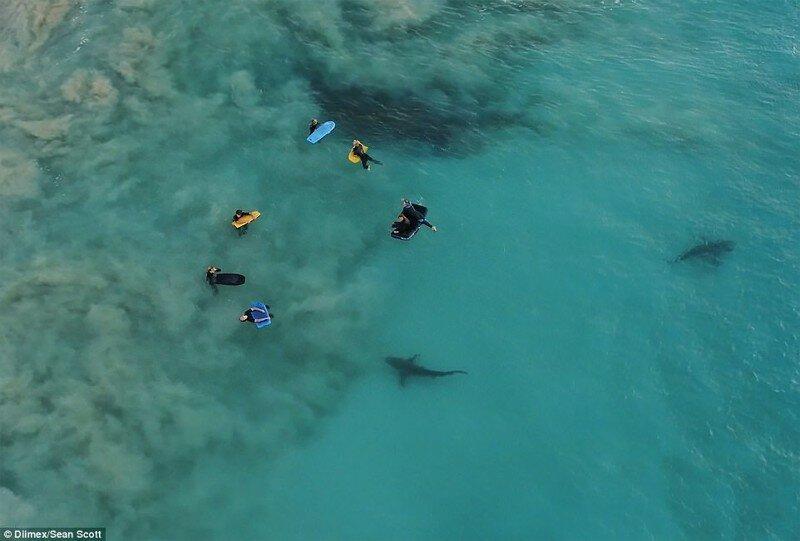 К беззаботным школьникам под водой подплыли 4 сотни акул
