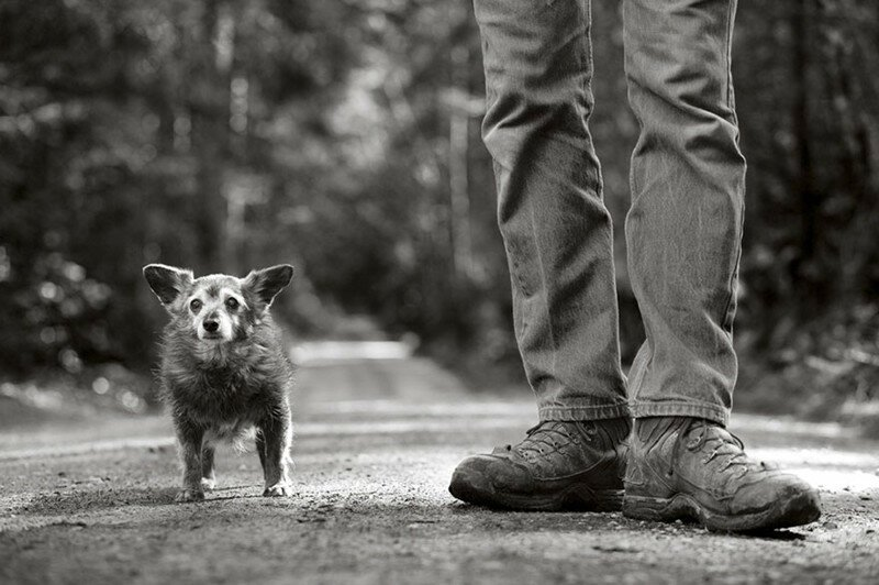 30 фотографий пожилых собак, которые растопят ваше сердце