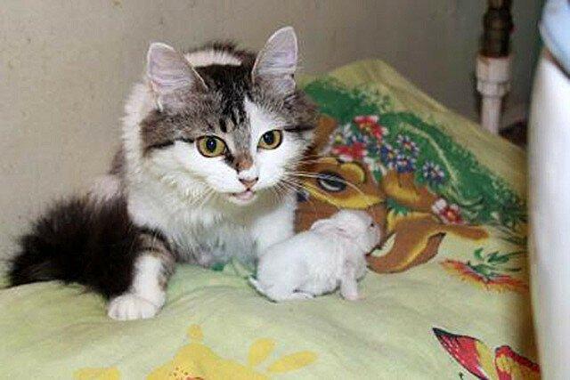 Кошка Мурка усыновила крольчонка, от которого отказалась родная мать