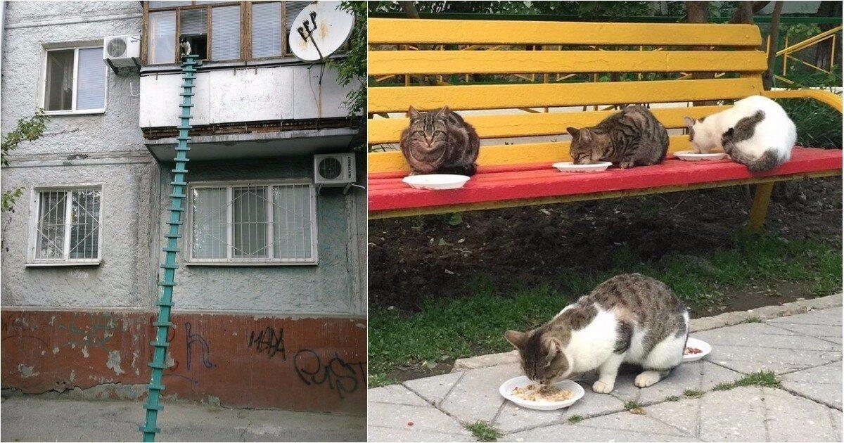 Как вы считаете, это настоящая забота о кошках или вред им?