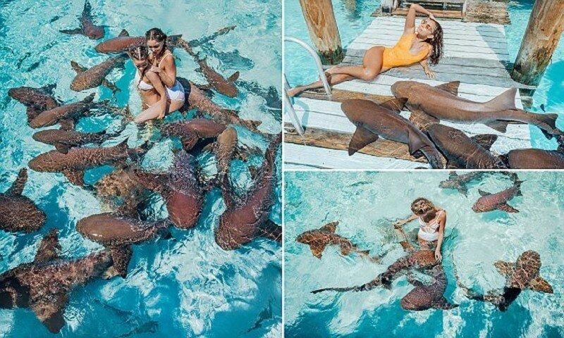 Модели устроили фотосессию с акулами