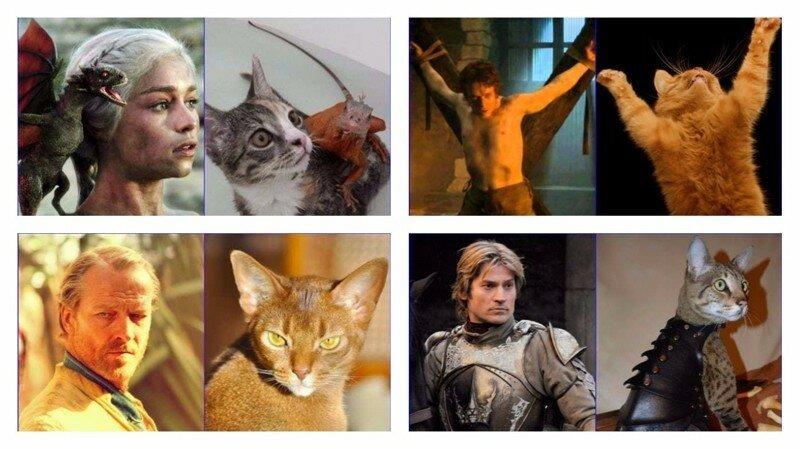 """26 кошек, страшно похожих на героев """"Игры престолов"""""""