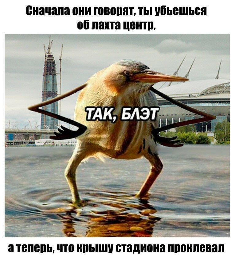 Тяжело быть птицей в Петербурге
