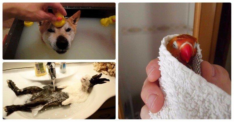 25 умилительных домашних животных, которые обожают принимать ванну