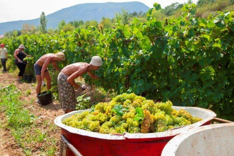 В Крыму набирает популярность трудовой туризм