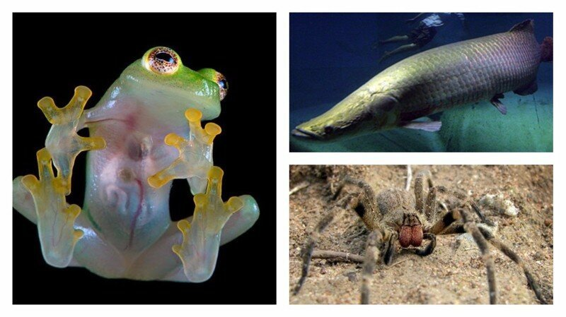 15 удивительных животных бассейна Амазонки