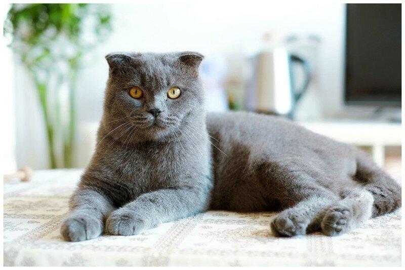 Муж или кот? Выбор очевиден