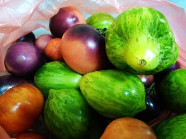 Липецкие фермеры вырастили необычные томаты на президентский грант