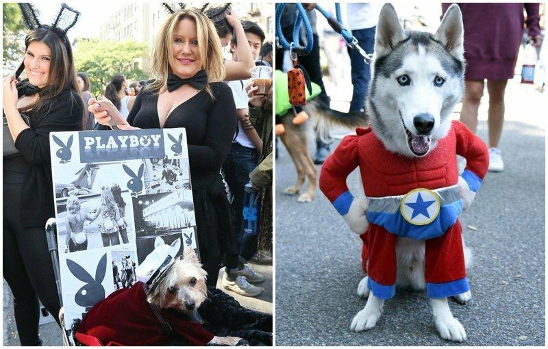 В Нью-Йорке прошел 27-ой костюмированный собачий парад: умилительное зрелище!