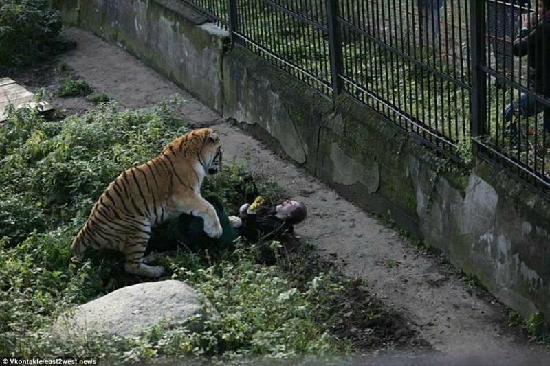 На сотрудницу Калининградского зоопарка напал тигр