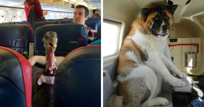 35 авиапассажиров из мира животных