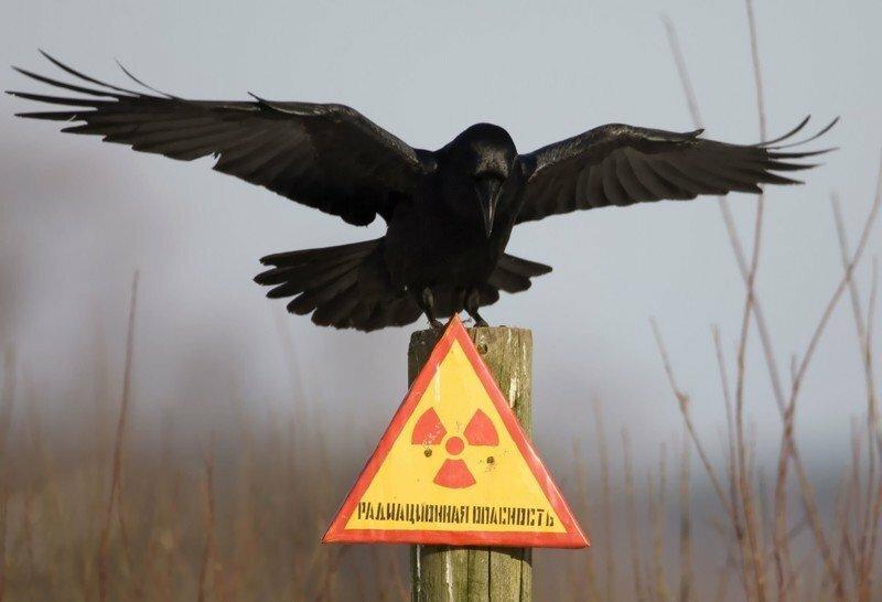 Уже поздно: уральцам не советуют спасаться от радиации