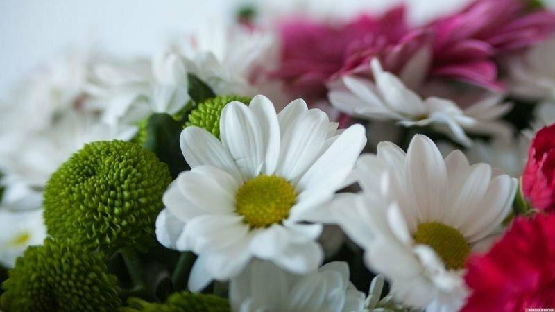 В Вологде мамам, воспитывающим 5 детей, вручили «медали материнства»