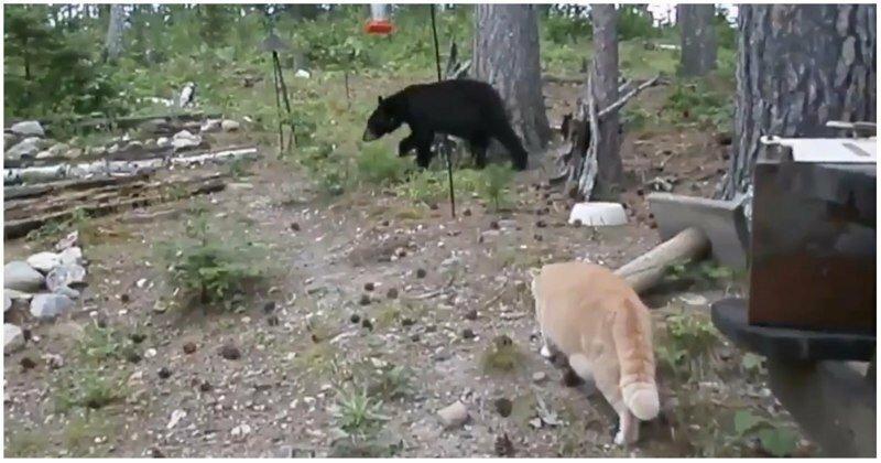 Рыжий кот загнал медвежонка на дерево