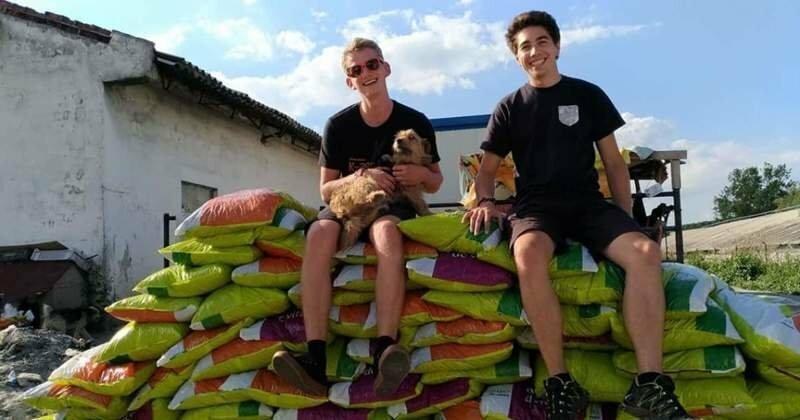 Румынский студент взял на довольствие 850 собак