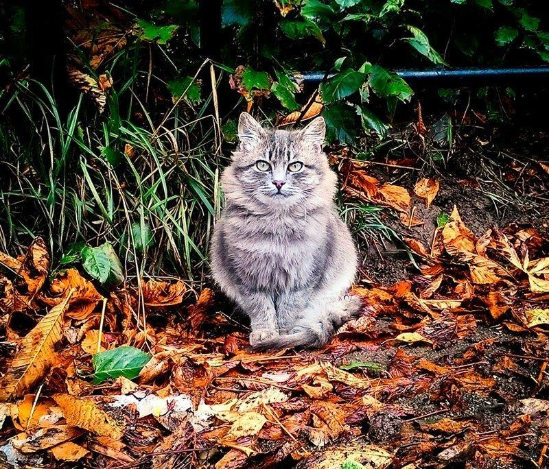 Котская жизнь