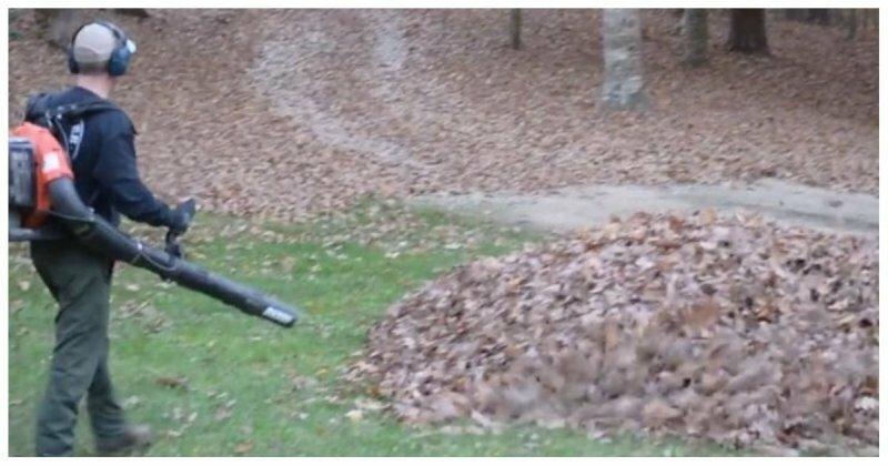 Неожиданный сюрприз для папы в куче опавших листьев