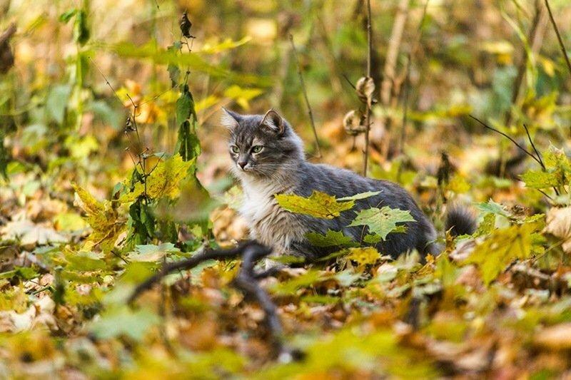 Котская жизнь.Часть 2