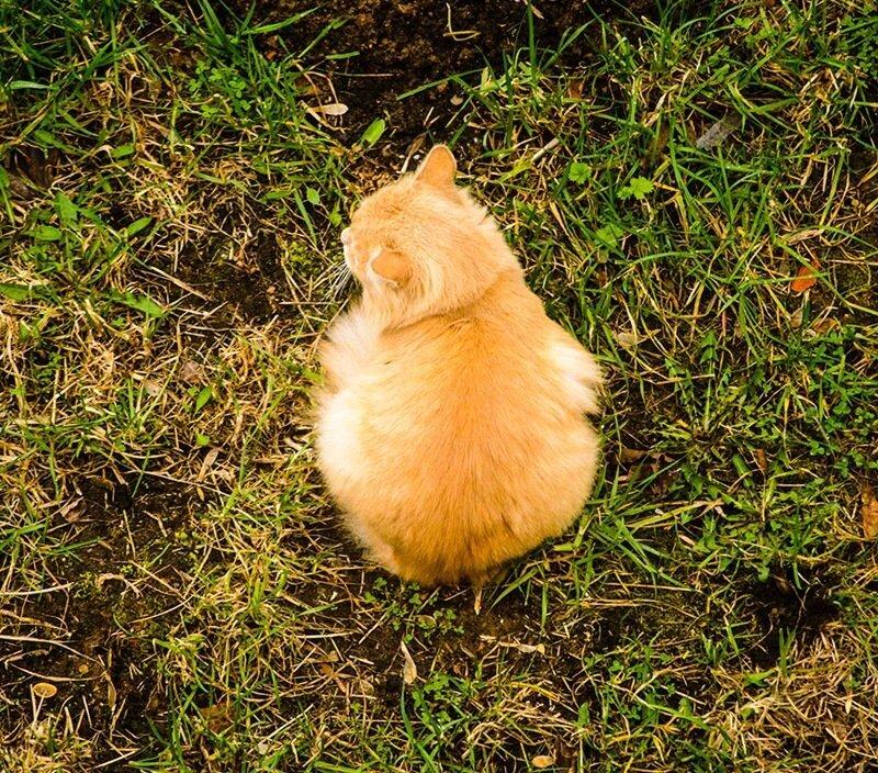 Котская жизнь.Часть 3