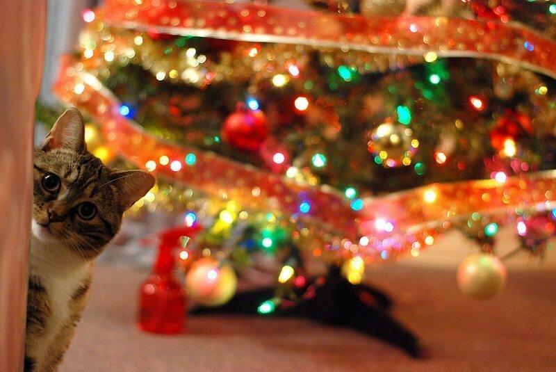 У них лапки! 17 котов, которые думают, что они елочные украшения