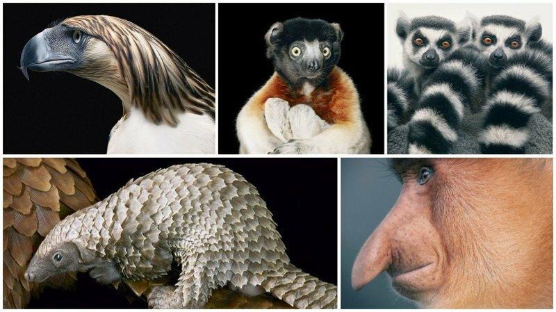 Восхитительные снимки редких животных от фотографа Тима Флача
