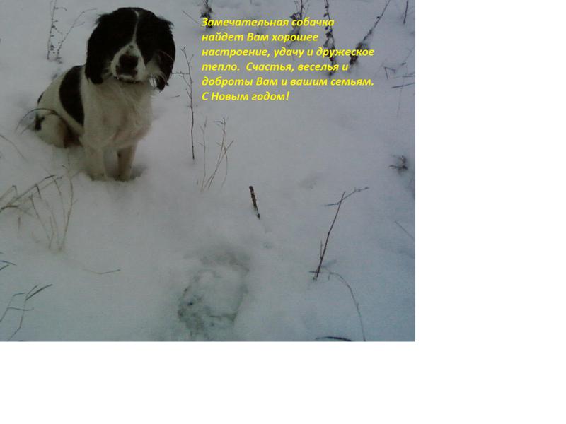 Зимняя собачка
