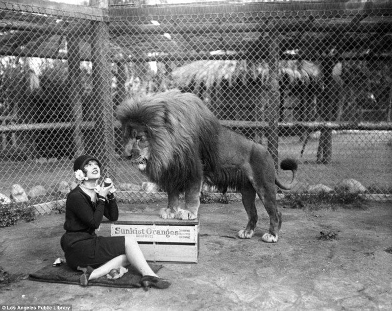 """Знаменитая """"голливудская львиная ферма"""": архивные фотографии 1925 - 1942 гг"""