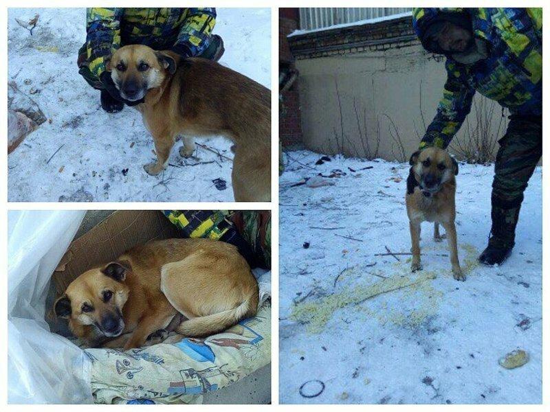 В Челябинске бездомный отказался расставаться со своим псом ради крыши над головой