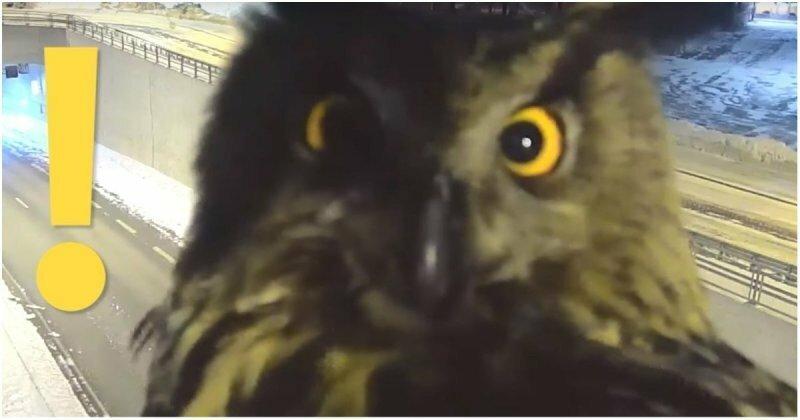 В Финляндии сова уселась перед камерой видеонаблюдения и помешала полиции следить за порядком на дорогах