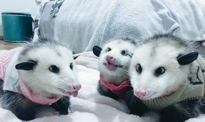 Страшненькие, но милые зверьки собирают толпы поклонников в сети
