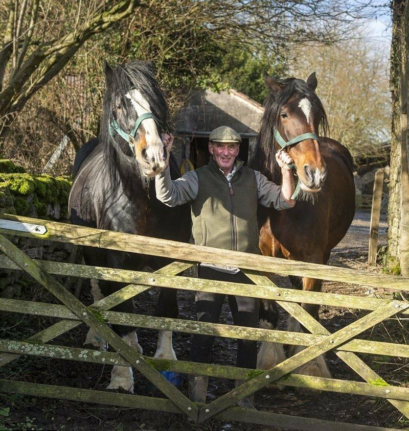 Шесть часов они пытались поднять лошадь на ноги, но сдались и решили ее усыпить