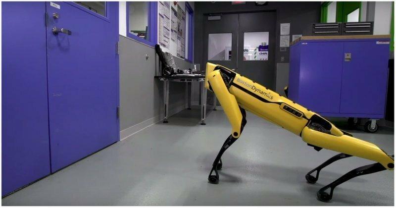 Теперь ты не спрячешься! Робопсов Boston Dynamics научили кооперироваться и открывать двери