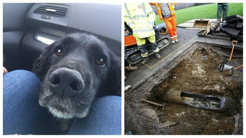По стопам Алисы: пес нырнул в трубу в погоне за кроликом и застрял в ней на 3 дня