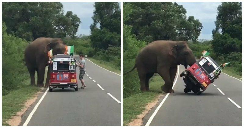 Коротко о том, как не надо кормить слонов
