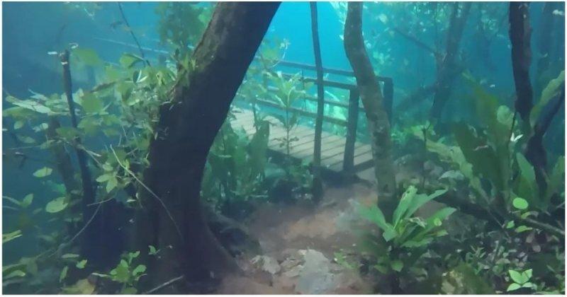 Туристическая тропа в Бразилии превратилась в потрясающий подводный мир