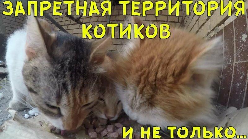 Пробрались на запретную территорию котиков