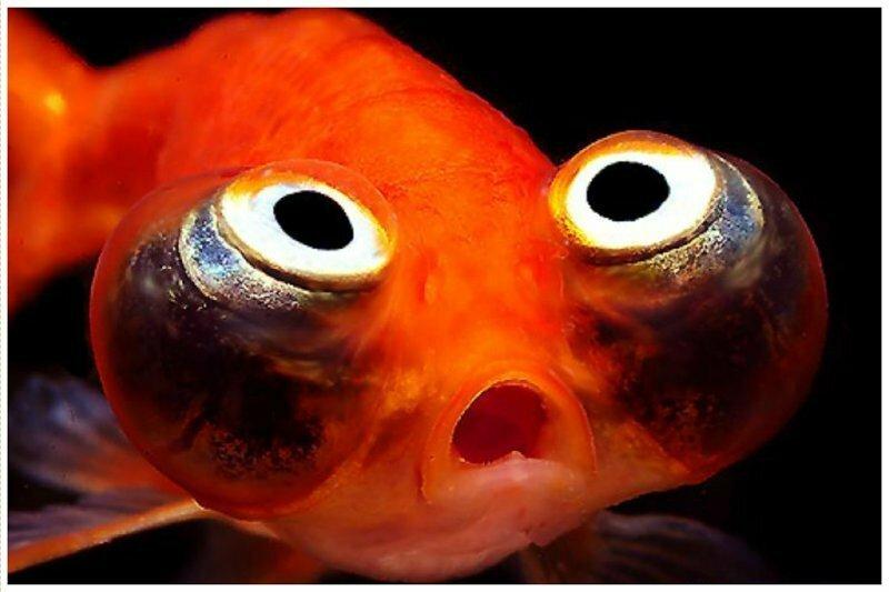 Что такого, нетривиального, вы бы попросили у золотой рыбки?