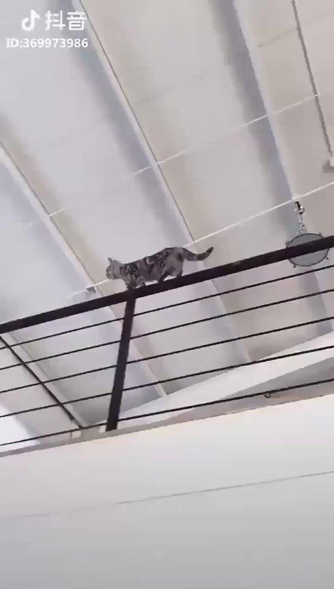 акробат котэ