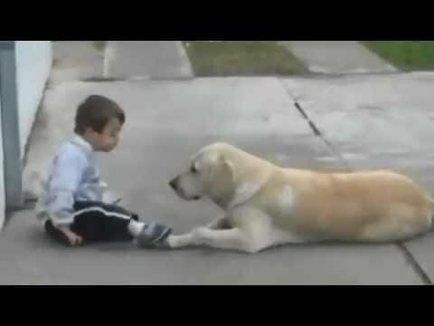 Лабрадор пытается подружиться с ребёнком с синдромом Дауна