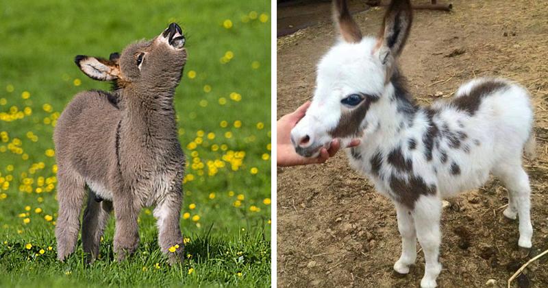 25 очаровательных маленьких осликов, которые сделают ваш день
