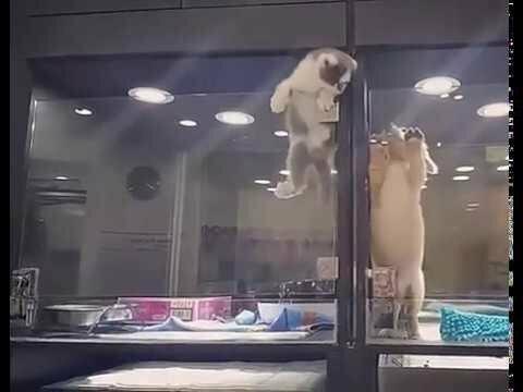 Как кошка с собакой говоришь